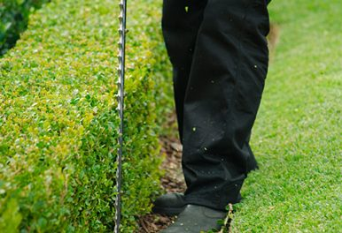 Tips to Keep Your Lawn and Garden in Tip-Top Condition