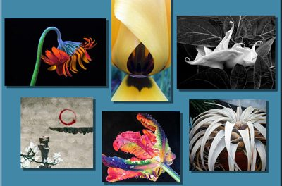 """Fusion Art's 2nd Annual """"Leaves & Petals"""" International Online Juried Art Exhibition Opened February 1, 2017"""