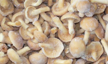 Frozen Mushrooms Market Share and Forecast Analysis 2017-2022