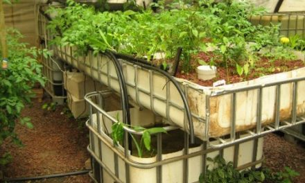 Aquaponics Market Analysis Report and Development Trends Upto 2022