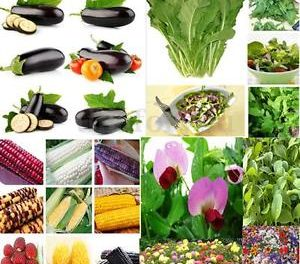 Global Vegetable Seed Market by Manufacturers, Regions, Type and Application, Forecast Outlook to 2021