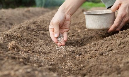 Chemical Fertilizer Industry Overview in China, 2011-2020: Ken Research