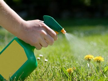 Importance of Weed Control in Garden Maintenance