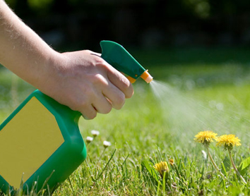 Why You Need A Best Weed Control Expert For Your Garden Clean Ups