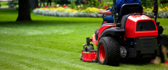 Find Great Tips For Cleaning Your Lawn With Lawn Care Services