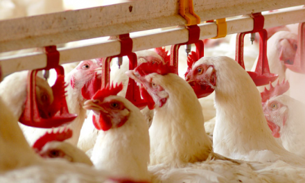 Global Poultry Feed Market Will Amass USD 226.20 Billion By 2021