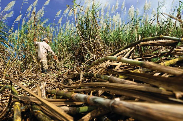 Refined Cane Sugar Market Poised To Surpass US$ 54,800 Mn by 2022-end