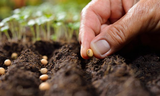 South Africa Seed Market Will Be Led By Growing Net Farm Income, Huge Demand Of Seeds From SADC Countries and Government's Industry Friendly Policies: Ken Research