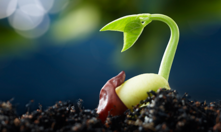 France Seed Market to Witness High Demand in Future from Russia and North & Sub-Saharan African Region: Ken Research