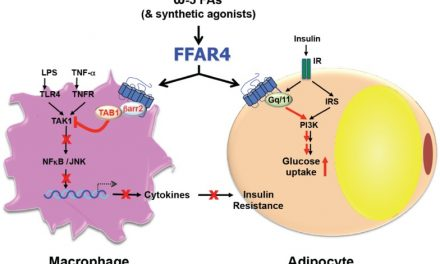 Global Free Fatty Acid Receptor 4 Sales Market Report 2018 Segments, Size and Demand 2025