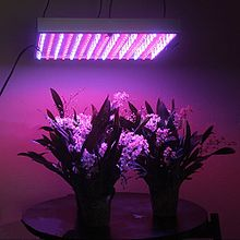 Grow Lamps Market Classification, Overview, Industry Prospect for next 5 years