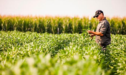 Thailand Crop Protection Market is led by Shift of Farmers from Low-value added Crops to High-value added Crops: Ken Research